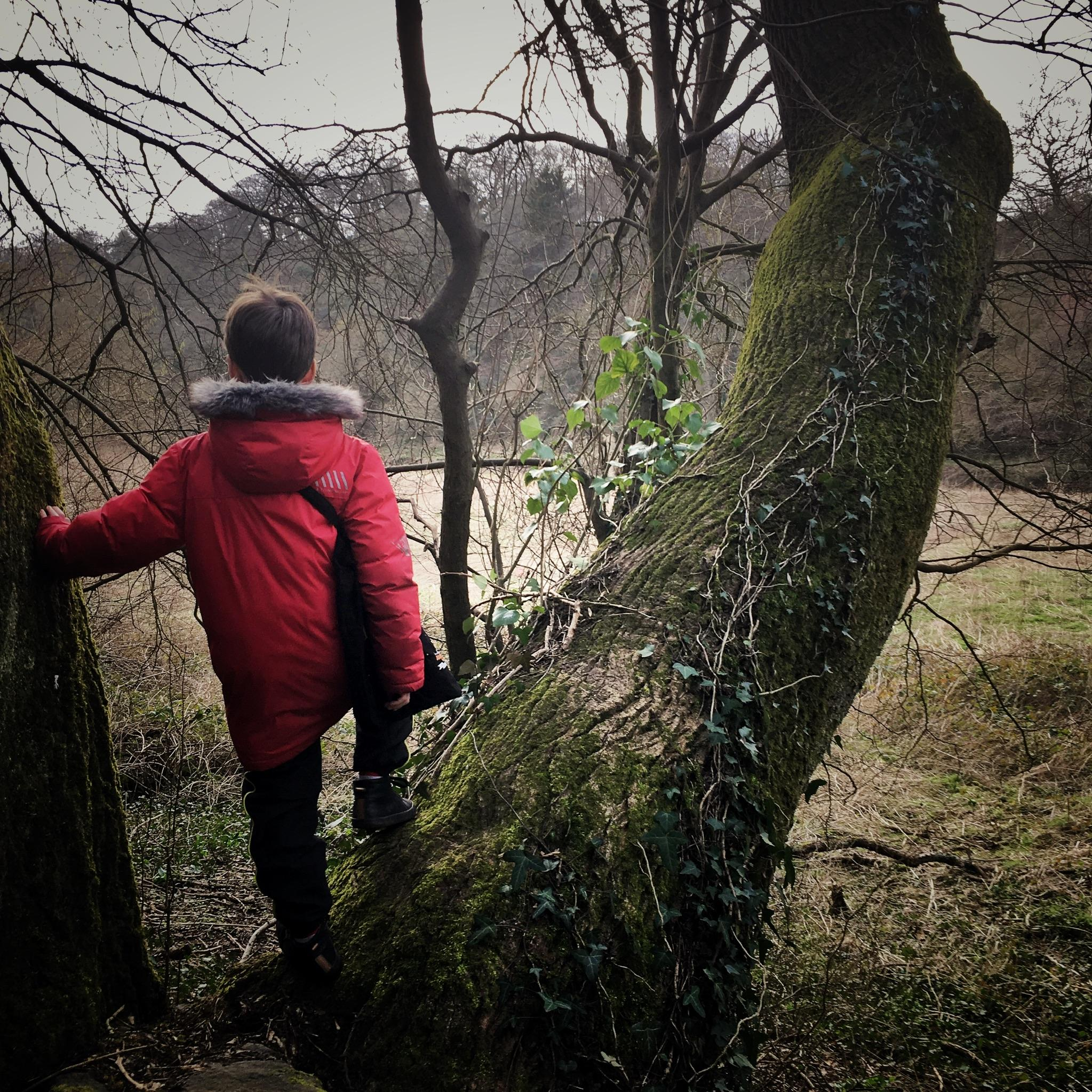 FEBRUARY FORAGE WITH THE KIDS